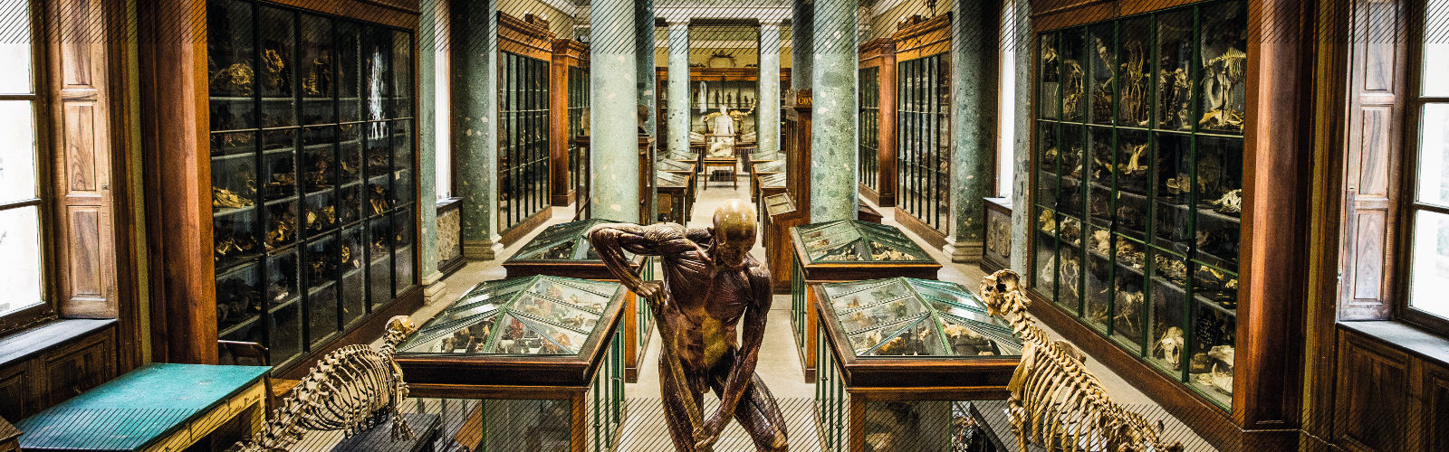musee anatomie (carrousel)