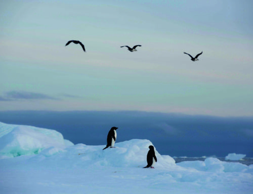 Refuge en Antarctique