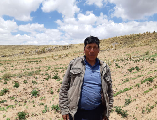 Quinoa is a beacon of hope for the Andean communities in a time of global crisis